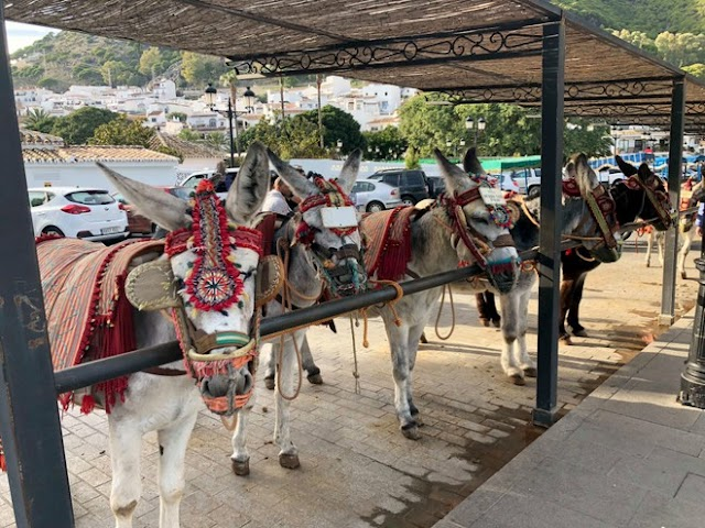 Spain banned tourists over 80 kg riding donkeys