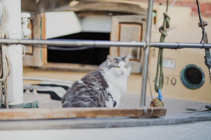 boat house cat