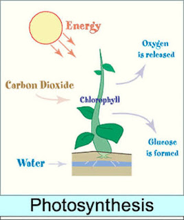 PHOTOSYNTHESIS NOTE