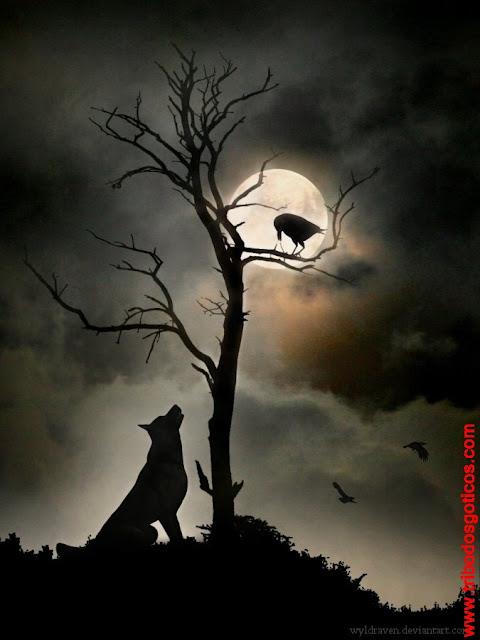 lobo faminto lua chia noite sombria escuridão observando passaro corvo