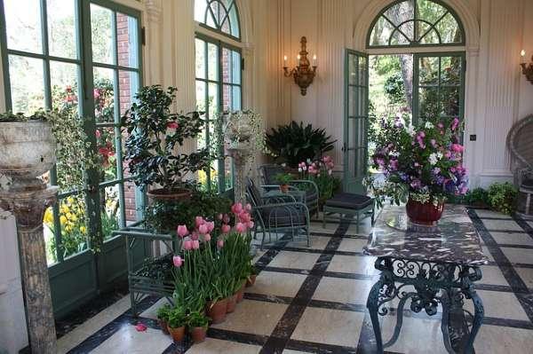 Best oxygen producing Indoor plants - Home decor ideas