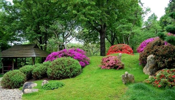 рододендроны и самшиты в японском саду