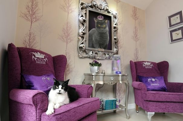 6. This actual luxury hotel for cats
