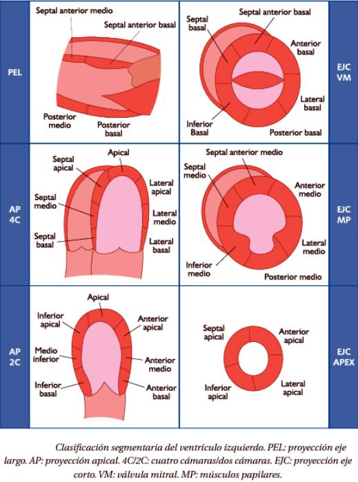 ICC: 2. Anatomía y Segmentación: