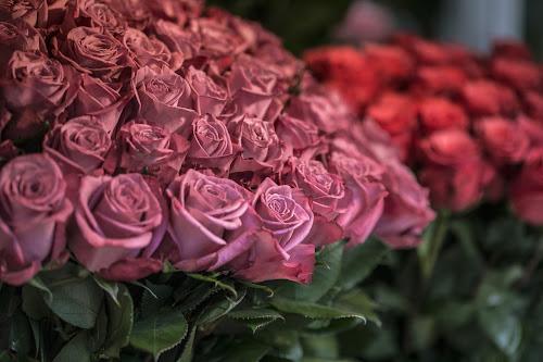Скидки до 20% в цветочном магазине Rurose.ru в агрофирме «Подмосковное»