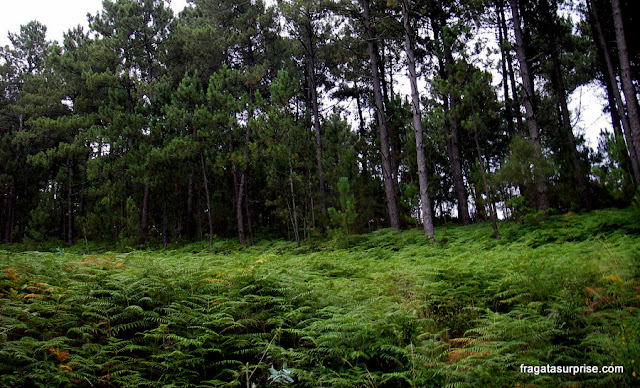 Bosque próximo à vila de Santiaguiño de Antas, na Rota Portuguesa do Caminho de Santiago