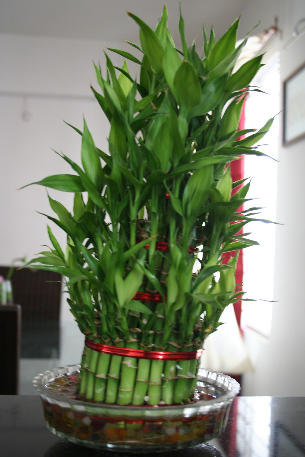 Inside Plants Bamboo Lamp Photo Bamboo Indoor Plants
