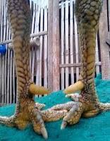 Sisik naga temurun padi kaki ayam aduan