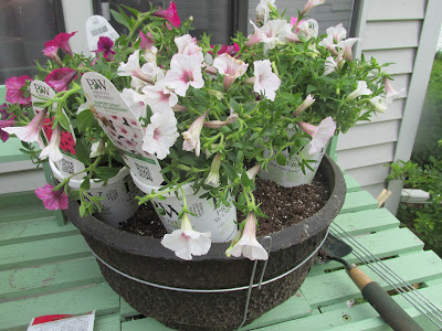 planting the flowers-Vickie's Kitchen and Garden