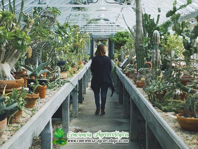 cuidados de los cactus en el vivero