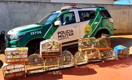 """Na Operação """"Liberdade"""" da Polícia Ambiental mais de 100 aves são apreendidas com criadores amadores de Fênix e Quinta do Sol - PR."""