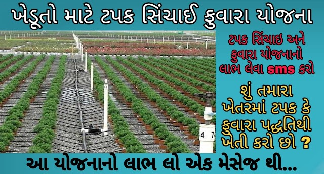 From an SMS from a farmer, the government will help for drip irrigation system!