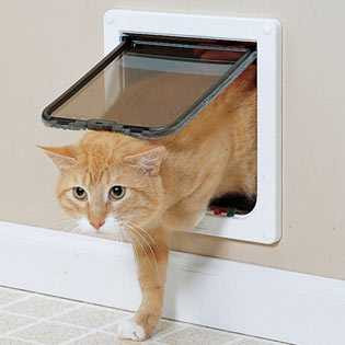Using-a-Cat-Flap-or-Cat-Door.jpg