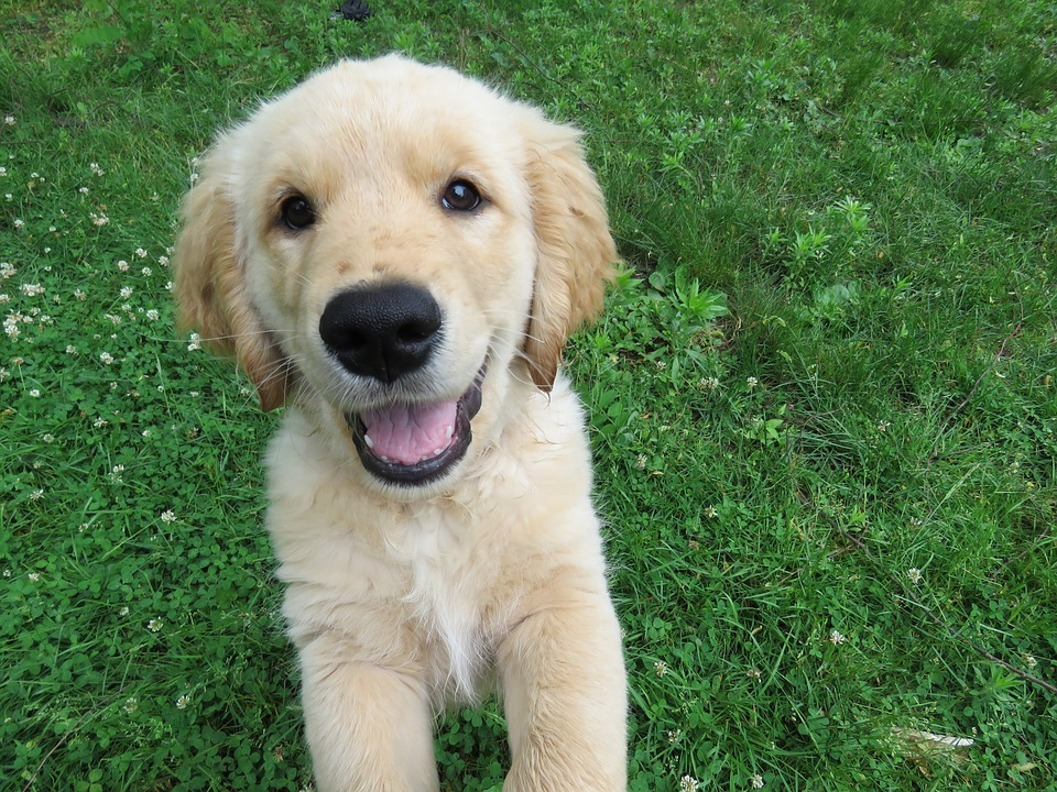 Dogs Puppies For Sale In Mangalore Best Dog Dealers Breeders