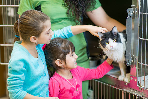 Adopting a Cat – From a Foster Home