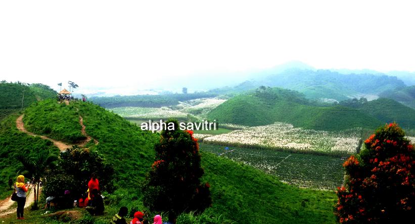 Bukit Teletubbies Blitar Bagai Berkelana Di Negeri Dongeng