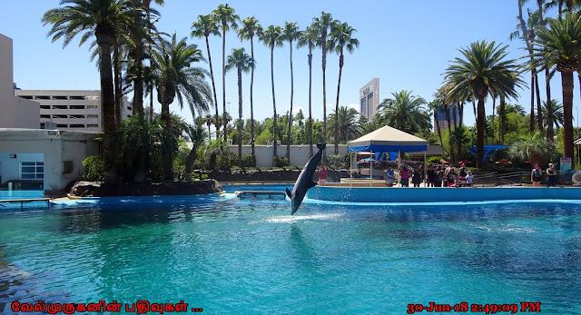 Secret Garden and Dolphin Habitat Las Vegas