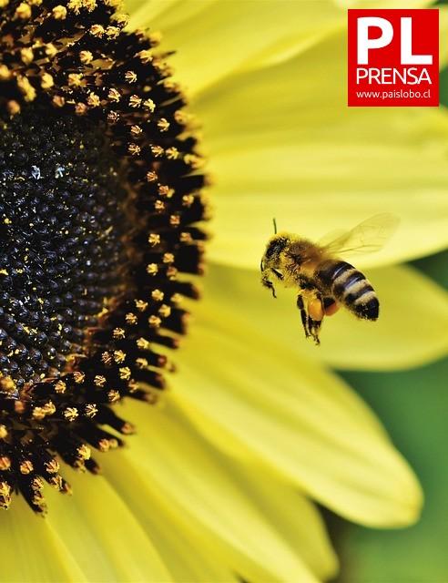 Descubren pesticidas prohibidos en Europa que se utilizan en Chile ▶️ ARDD Podcast 938