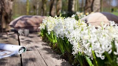 Un jardín lleno de flores blancas con bulbos de flor