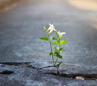 Pengertian Resiliensi, Aspek, Ciri, dan Faktor Pembentuknya