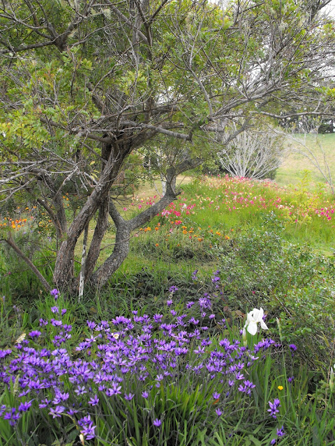 New Zealand garden view