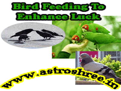 why to feed birds as per astrology by astrologer