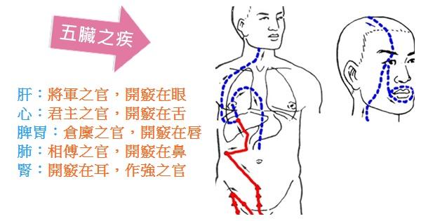 中醫談五臟之疾(肝、心、脾、肺、腎)