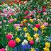 Gastos do Governo Robinson com flores superam investimentos na Polícia Civil