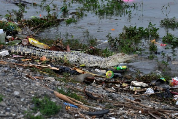 Sungai-sungai di Indonesia yang Mengalami Pencemaran