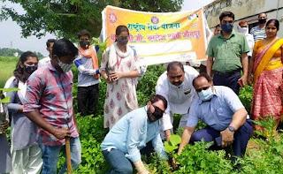 वृहद पौधरोपण से जीवन को मिलेगी संजीवनीः डा. अजयेंद्र    #NayaSaberaNetwork