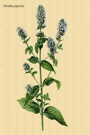 aromaterapia y plantas mediterraneas