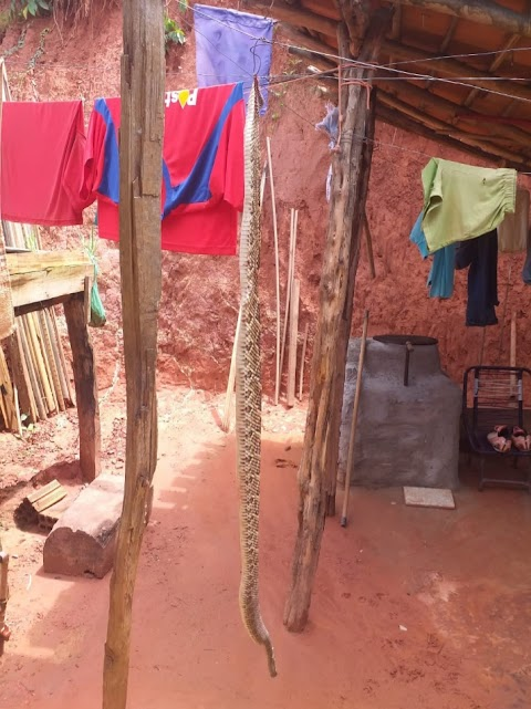 Cascavel é encontrada em residência e chama a atenção de vizinhança em Poção de Pedras