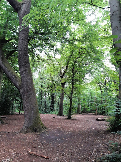A woodland path through some tall trees, with a heavy leaf canopy