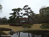 Peaceful scenery with two pruned pines behind a pond - Tokyo Imperial Gardens, Japan