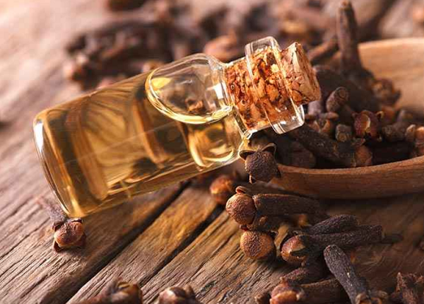 Benefits of clove oil for slimming