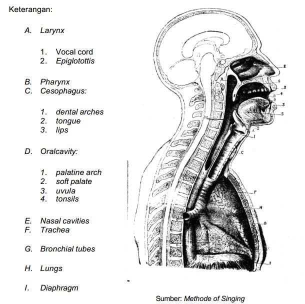 hormoni articulari)