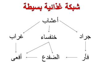 شبكة غذائية بسيطة