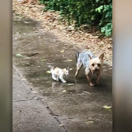 Dog rescues tiny abandoned kitten and leads her to safety