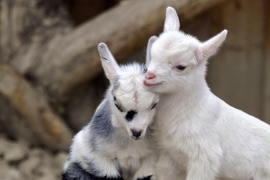The 30 Cutest Animals Ever Seen Best Photography Art