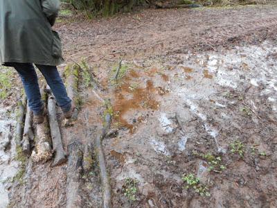 Mud, Mid-Devon, January
