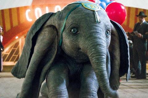 Beszüntetnék a vadállatos produkciókat a brit cirkuszokban