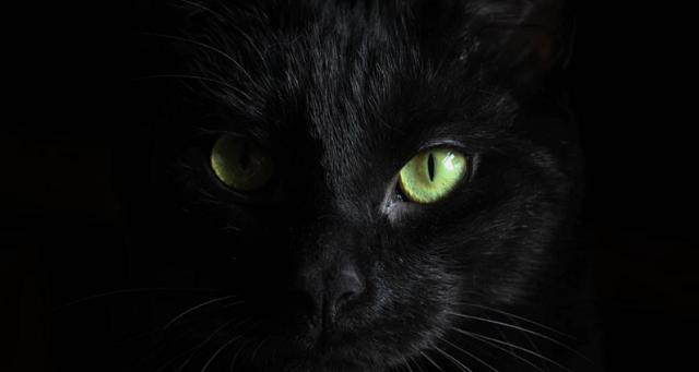 Crno na crnim mačkama
