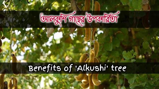 কপিকুচ্ছ(আলকুশী) এর বনৌষধি গুনাগুন ও উপকারিতা- Medicinal properties and benefits of Kapikuchch (Alkushi)
