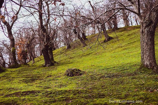 Gaj kasztanowy, Biforco, Toskania nieznana