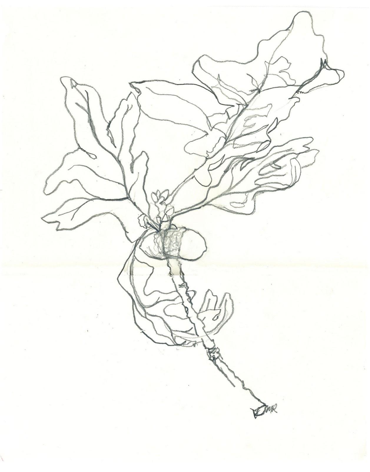 Beyond Words The Symbolic Language Of Plants Michael Rawson