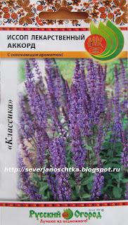 иссоп-пряное, лекарственное и декоративное растение
