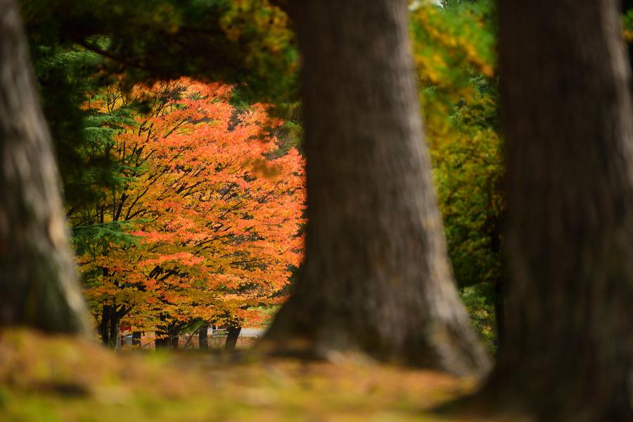 奥卯辰山健民公園の紅葉