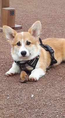 educateur chien chiot annecy faverges ugine thones albertville
