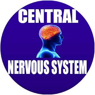 central nervous system in spanish