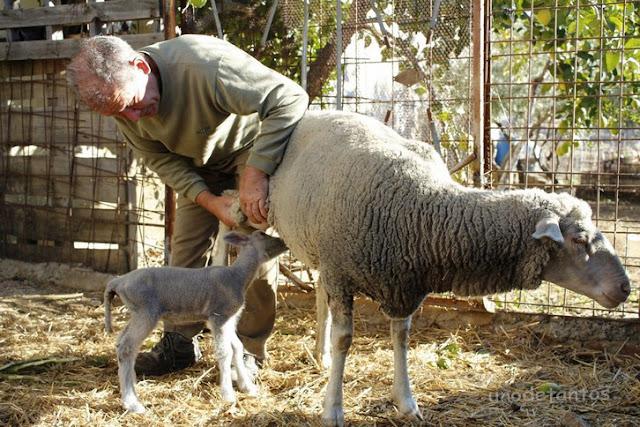 http://unodetanos.blogspot.com.es/2017/02/el-pastor-y-sus-ovejas.html